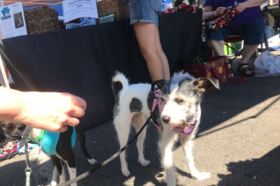 Dogs at Woofstock Event 2018